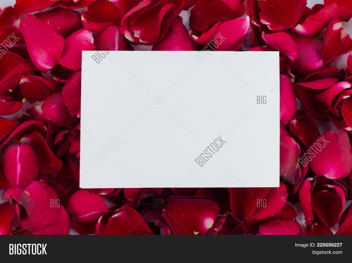 Greeting Card Red Rose Image Photo Free Trial Bigstock