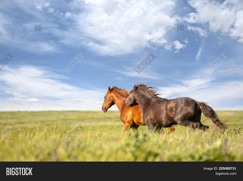 Two Horse Long Mane Image Photo Free Trial Bigstock