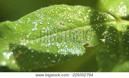 Drop of dew in morning on leaf with sun light. Water drops on the green grass. Water drops on fresh green lea close up, macro.