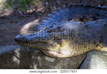 Crocodile in sunlight photo. Crocodile mouth closeup with sharp teeth. Tropical nature animal. Wild predator in jungle. Dangerous water animal. African crocodile. Big alligator. Exotic jungle wildlife