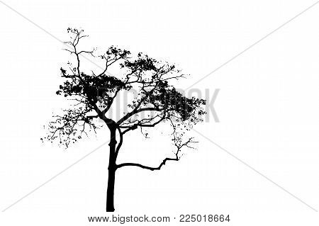 Black Tree Silhouette On White Background. Tall Tree Vector Silhouette Isolated. Tropical Tree. Stra
