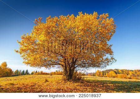 A lone tree on a meadow in autumn landscape.
