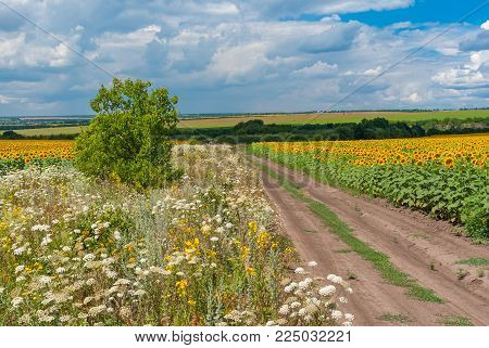 Rural landscape with road among sunflower fields at summer season near Dnipro city, central Ukraine