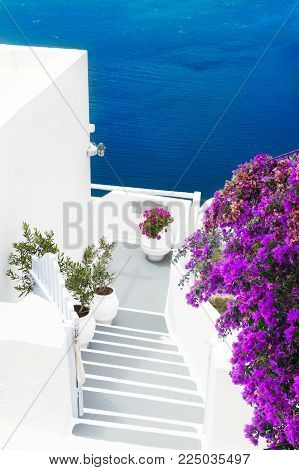 blue water and white stairs, details of Santorini island, Greece with flowers