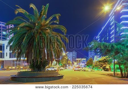 SOCHI, RUSSIA - FEBRUARY 2, 2018: Palm at night illumination.