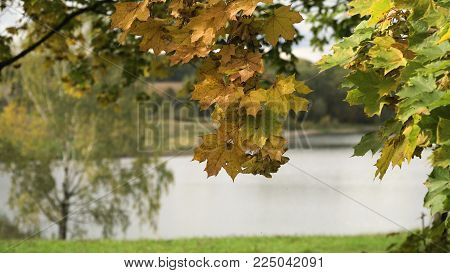 Autumn landscape in the countryside, lake, sky, autumn day.Autumn maple leaves on a tree. Maple leaves against the sky. Autumn season