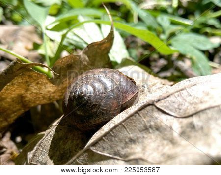 Snail on a gray leaf on a background of green grass in sunny weather in the forest close-up blurred background