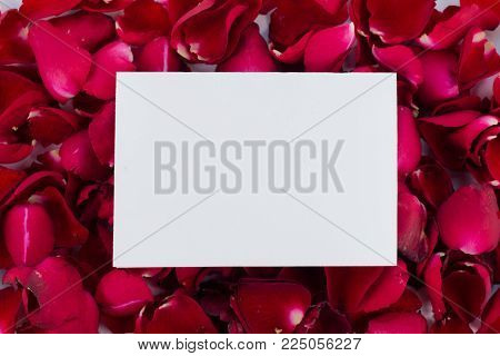 Greeting card red rose petals. with Blank Message Sign for Your Text or Message. Greeting card with a red rose petals and space for text using as love, valentine day concept , Wedding card.