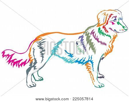 Colorful contour decorative portrait of standing in profile dog Nova Scotia Duck Tolling Retriever, vector isolated illustration on white background
