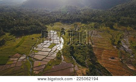 Terrace rice field from aerial view. Aerial view of a rice field. Terrace rice field from on the background of mountains and hills. Philippines, Camiguin.
