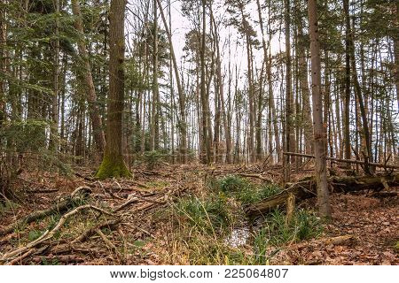Ground Of The Forest After A Big Storm
