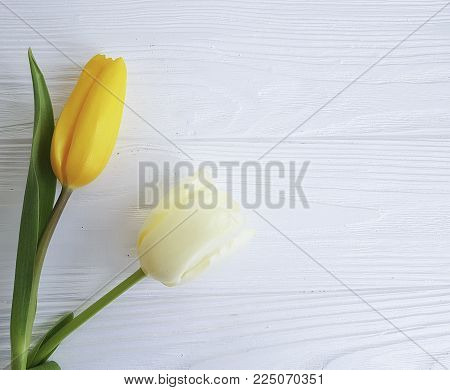 two tulips on white wooden, mourning multi, season, funeral, still