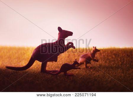 Three kangaroos on the meadow on sunset background.