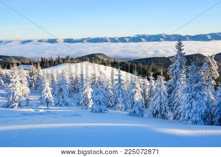 Mountains in a foggy morning and snow-covered green Christmas trees.Marvelous winter background. Beautiful Christmas holliday in the mountain. Winter landscape for leaflets.
