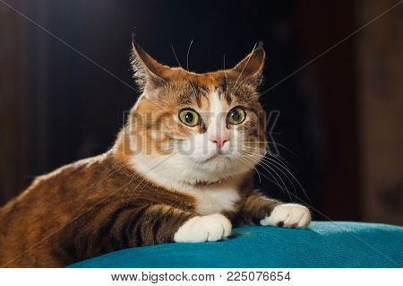 Pretty ginger cat pricked up ears in the alert. Surprised cat, funny emotions.