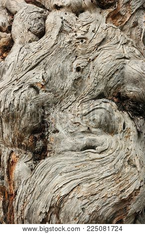 Bark texture of old juniper. The time-bent trunk of the old juniper.