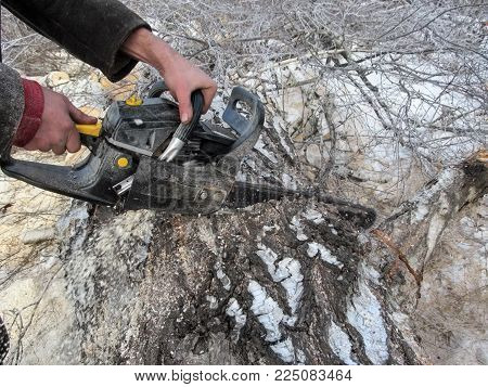 In the process of sawing a thick log on pieces in winter day. A man holds a chainsaw, which crashed into the trunk of a birch, and from under it fly out sawdust