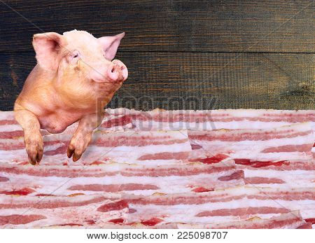 Pig looks out over the layers of lards on the dark wooden background. Sign-board for butcher's shop