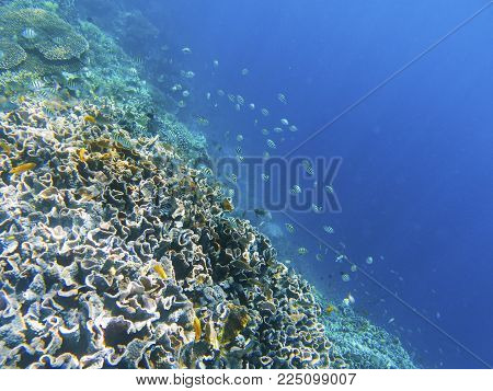 Coral reef wall with dascillus fish. Exotic island shore. Tropical seashore landscape underwater photo. Coral reef animal. Sea nature. Sea fish in coral. Undersea view of marine life. Coral landscape