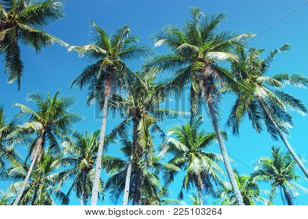Coco palm tree tropical landscape. Palm skyscape turquoise toned photo. Exotic island vacation banner template with text place. Palm tree and blue sky background. Tropic greenery. Palm leaf backdrop
