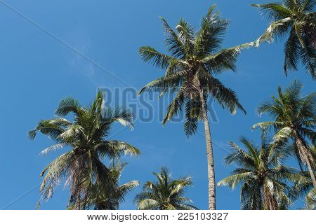Coco palm tree on sunny blue sky. Tropical escape destination photo. Exotic island vacation banner template with text place. Palm tree tropical landscape background. Tropic greenery. Palm leaf view