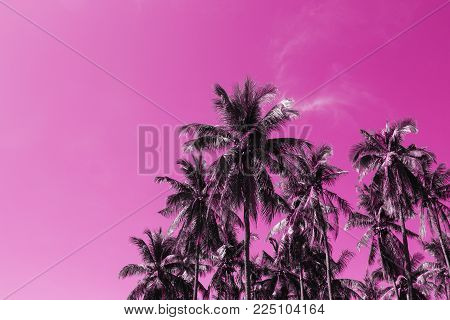 Coco palm tree tropical landscape. Palm skyscape pink toned photo. Exotic island vacation banner template with text place. Palm tree and blue sky background. Tropic greenery. Palm leaf backdrop