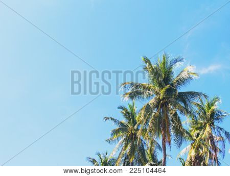 Coco palm tree tropical landscape. Green palm leaf on sunny blue sky photo. Exotic island beach holiday banner template with text place. Palm silhouette on sky background. Palm leaf backdrop