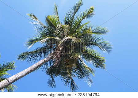 Coco palm tree tropical landscape. Green palm skyscape photo. Exotic island beach holiday banner template with text place. Palm tree and blue sky background. Tropic greenery. Palm leaf backdrop poster