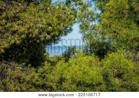 The Sea Viewed Through The Gap Between The Trees In Malaga, Spain, Europe
