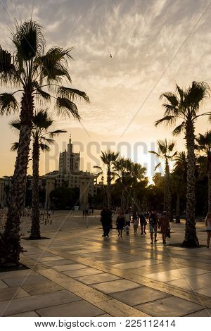 Golden Sun Sets Behind A Palm Grove At Malaga, Spain, Europe