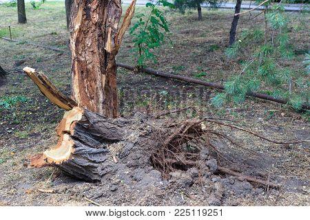 The Sawn-off Tree Stub