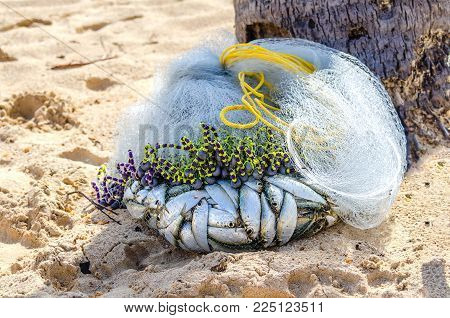 small fresh, silvery, live fish caught from the ocean in fishing nets, in the shade of a palm tree on yellow sand