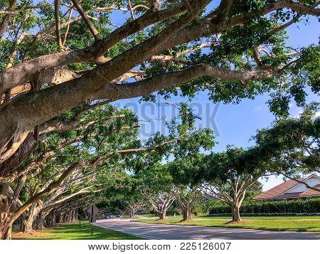 giant trees shading the street of a neighborhood