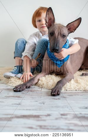 Red-haired girl hugging her Mexican Hairless Dog xoloitzcuintle