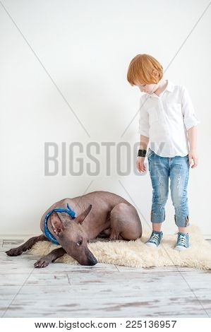 Red-haired child and Mexican Hairless Dog xoloitzcuintle