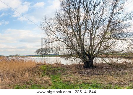 Tree with bare branches at the bank of a smal lake in the Netherlands. It is at the end of a cloudy  day in the winter season.