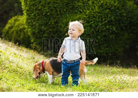 Happy little boy walking with his beagle dog in the park