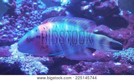 Fish and coral reef. Tropical fish on a coral reef. Wonderful and beautiful underwater world with corals and tropical fish.