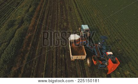 Mechanized carrot harvesting.erial view.Machine harvesting carrots moves across the field and loads the carrot truck.Harvest carrots combine and load it into the truck.