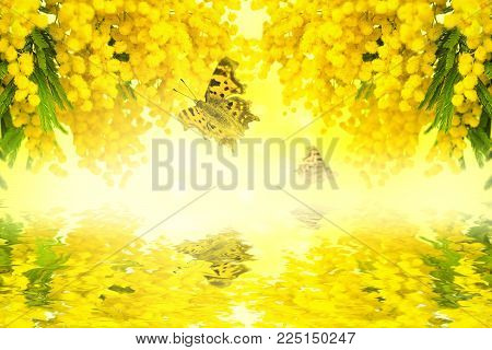 Mimosa Flower Blossom With Butterfly On Yellow Background With Water Reflection. Greeting Card Frame