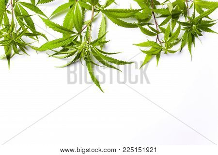 Marijuana branches with small green leafs isolated on white