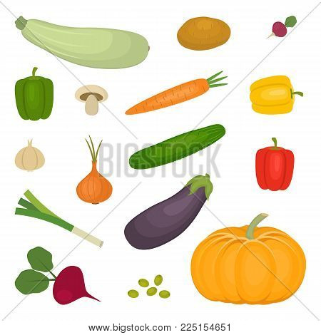 Set of vegetables, isolated on a white background. There is a potato, zucchini, eggplant, cucumber, onion, pumpkin, mushroom, carrot, beet, sweet pepper, radishes in the picture. Vector illustration.