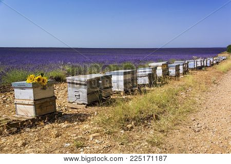 Many wooden hives along country road and lavender field behind them in sunny summer day in Provence, France. There are a few of sunflowers on the first hive.