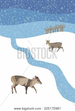 Winter snow scene with  two muntjac deer