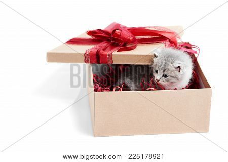 Cute present. Little grey fluffy funny kitten looking out of birthday box with big red bow on top. Cuteness happiness small fluffy adorable charming playful kitty valentine decoration white