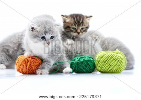 Small grey fluffy adorable kitten is playing with orange yarn ball while other kitties are playing with green wool balls in white photo studio. Little gray adorable amusing cute curious fur blue eyes