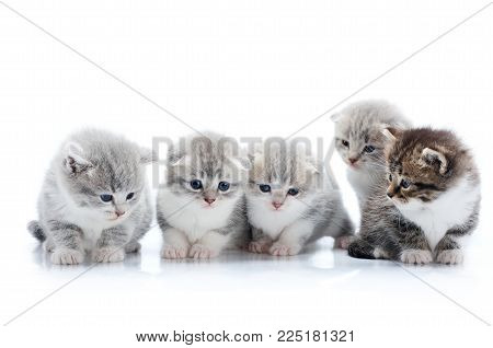 Four little grey adorable kittens and one dark brown curious kitten are looking at one another being interested and anxious while posing during photoset in white photo studio. Cute gray fluffy