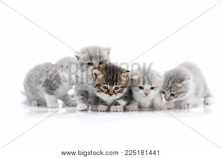 Four small cute grey kittens and one dark brown kitten are posing in white photo studio being anxious and curios about surrounding. Fluffy gray funny adorable cats paws fur happy joy