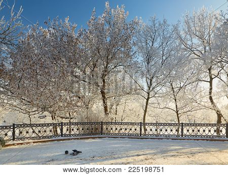 Branches Of Trees In Icy Cold Frost.
