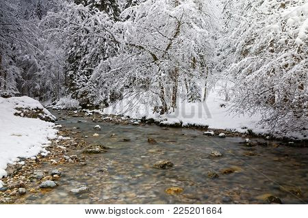 A river runs through the snowy trees of a winter landscape of a French Alps forest